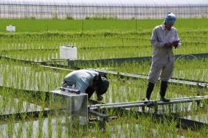 水稲栽培コース