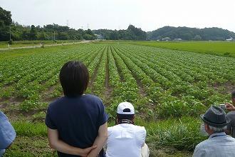 s-良い感じに管理された大豆畑に見入る参加者