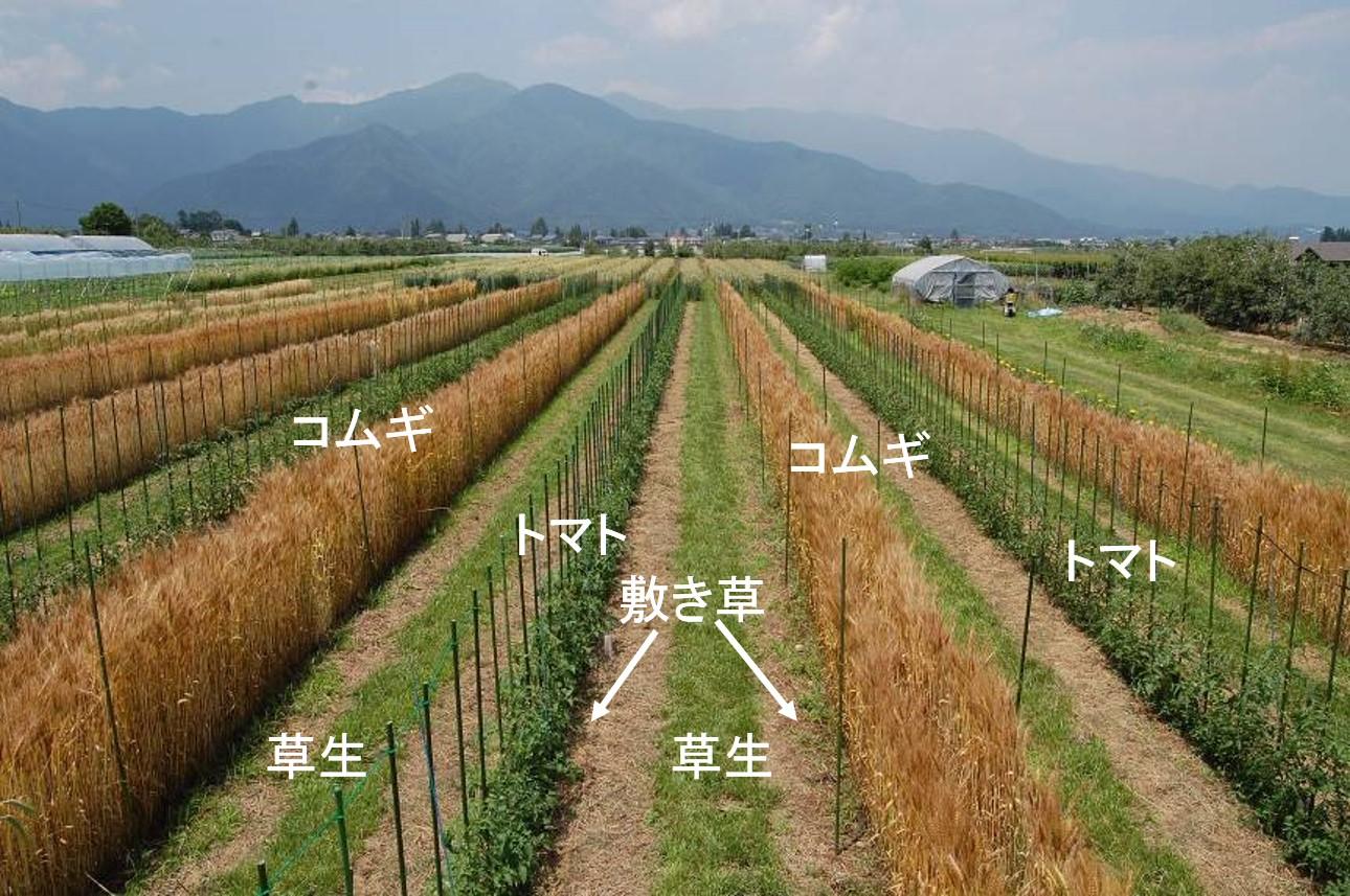 育種圃場の環境