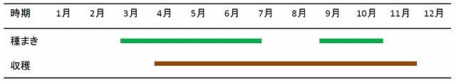 s-ベビーリーフ栽培暦