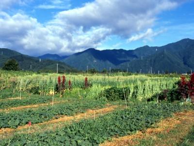 センター 自然 農法