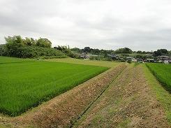 farm_chita1