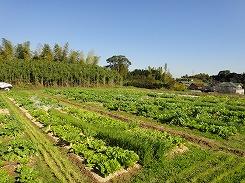farm_chita2