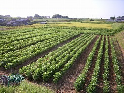 farm_chita4